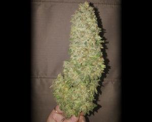 StrawberryG3